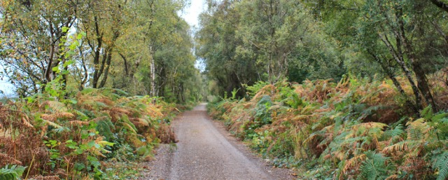 41 forest track, North Sannox, Ruth's coastal walk around the Isle of Arran