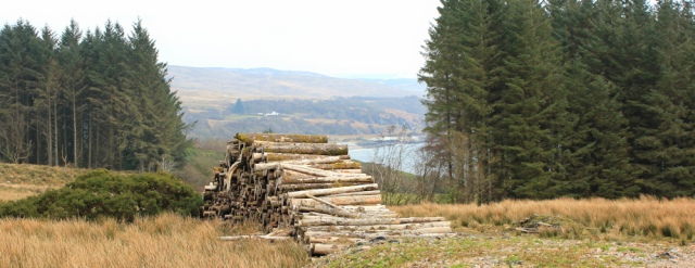 18 logging area, Ruth's coastal walk, Kintyre