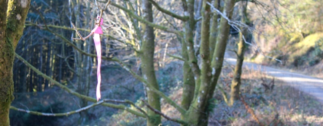 36 pink ribbon on tree, Carradale, Ruth walking the coast of Scotland