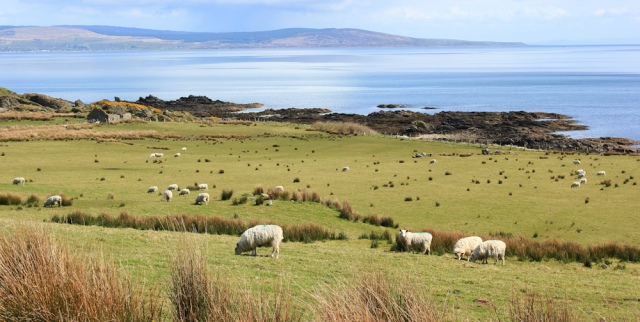 22 Ugadale Point, Ruth's coastal walk, Kintyre, Scotland