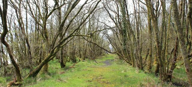 23 old coast road, West Tarbert, Ruth's coastal walk