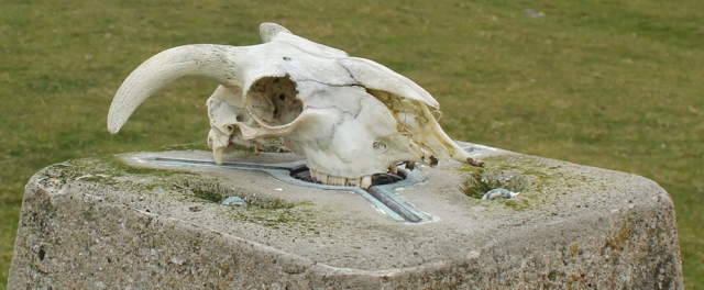 38 skull on top of trig point, Ruth's coastal walk, Kintyre, Scotland