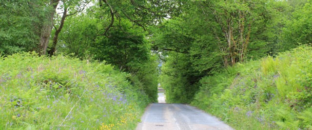 01 lane near Crinan Canal, Ruth's coastal walk, Scotland
