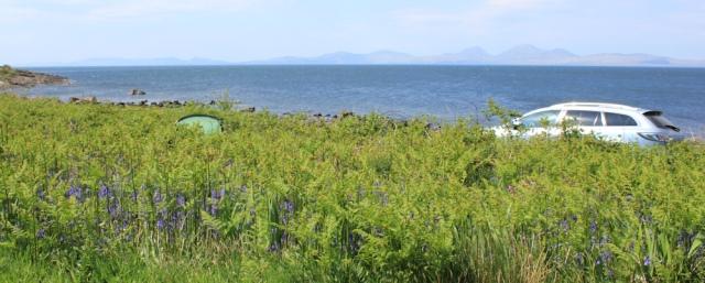03 bluebells and wild camping, Ruth's coastal walk, Argyll, Scotland