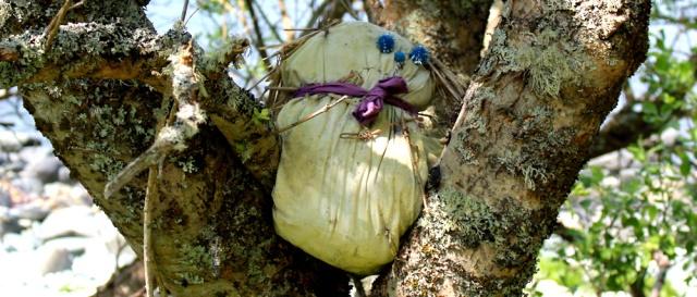 06 scarecrow in tree, Ruth's coastal walk, Argyll, Scotland