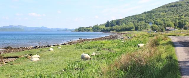 08 road to Achnamara, Ruth's coastal walk, Knapdale, Scotland