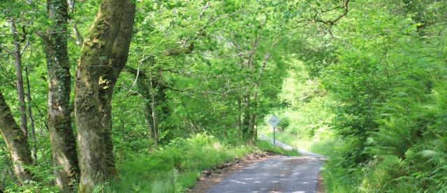 21 winding road, Loch Melfort, Ruth's coastal walk around Scotland