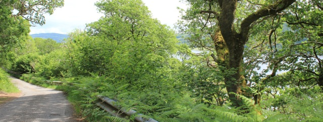 22 road above Loch Nell, Ruth's coast walk around Scotland
