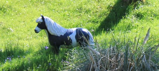 23 fake horse, Ruth's coastal walk, Knapdale, Scotland