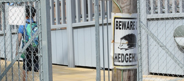 27 beware hedgehogs, Ruth Livingstone