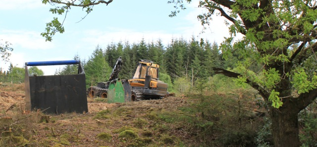 32 no logging now, Ruth's coastal walk, Argyll, Scotland