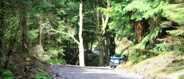 33 car on forest track, Ruth's coast walk around Scotland