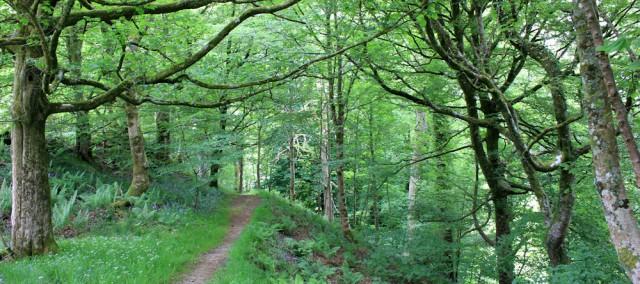 40 forest walk to Kilmartin, Ruth's coastal hike, Scotland