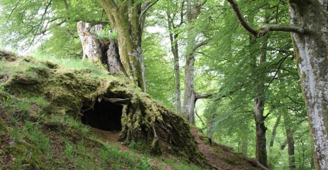 41 root cave, Ruth's coastal walk, Scotland