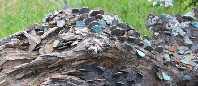 54 trunk of the money tree, Ruth's walk around Scotland's coast