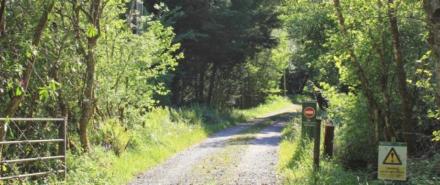 56 forestry tracks, Achnamara, Ruth walking the coast of Argyll, Scotland