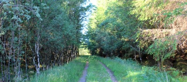 58 track through woodland, Ruth walking the coast of Argyll, Scotland