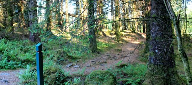 65 woodland path, Ruth walking the coast of Argyll, Scotland