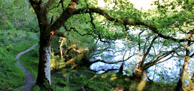 66 Loch Coille-Bharr, Ruth walking the coast of Argyll, Scotland