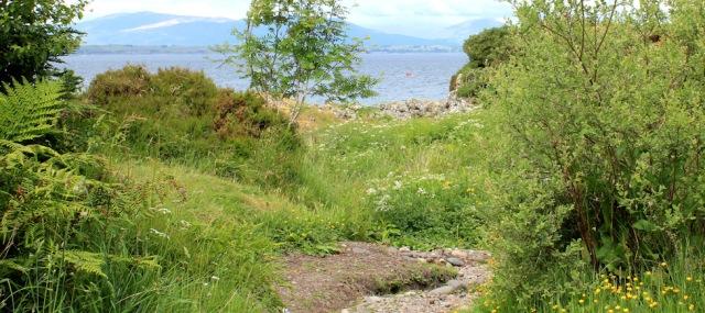 50 bushes far end of beach, Ruth's coastal walk, Oban, Scotland