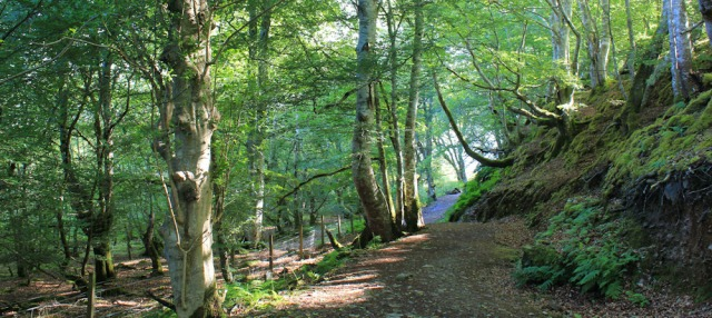 11 Tralee Woodland, Ruth's coastal walk in Scotland