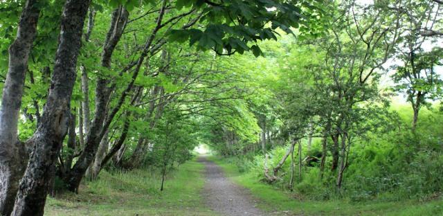 14 woodland, Benderloch, Ruth's coastal walk around Scotland