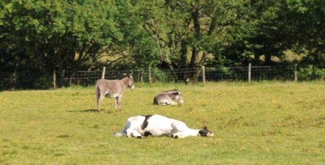 17 field and dead horse, Ruth's coastal walkaround Scotland