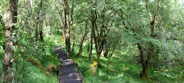 25 board walk, Shian Wood, Ruth's coastal walkaround Scotland