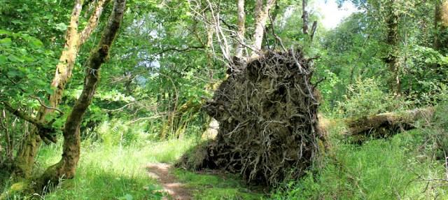 26 familiar sight, Ruth's coastal walkaround Scotland