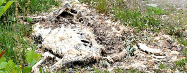 32 decomposing deer, Ruth hits the highlands