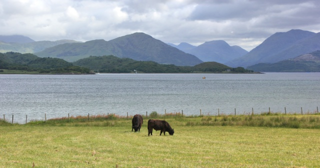 34 view over Loch Creran, Ruth's coastal walkaround Scotland
