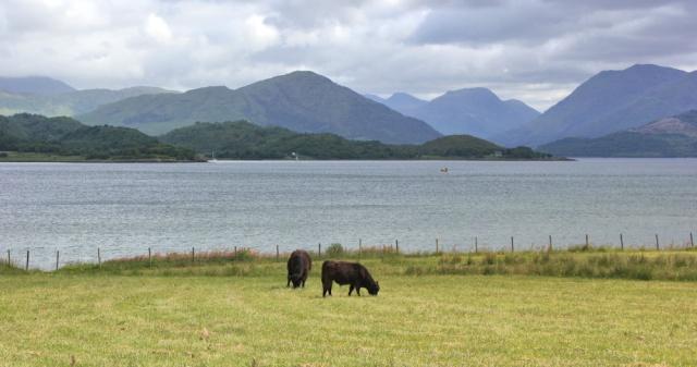 34 view over Loch Creran, Ruth's coastal walkaround Scotland