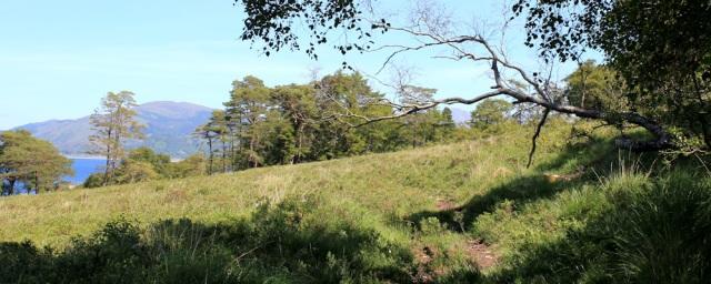 19 Loch Linnhe from the Ardsheal woods, Ruth's coastal walk around Scotland