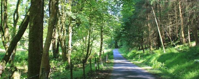 23 wooded estate road, Ardsheal House, Ruth's coastal walk around Scotland
