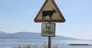25 cows for three miles, Ruth's coastal walk around Scotland