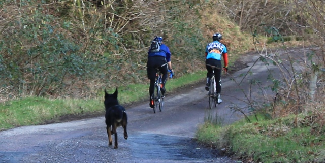 38 cyclists and dog, Ruth hiking the coast of Morvern Peninsula