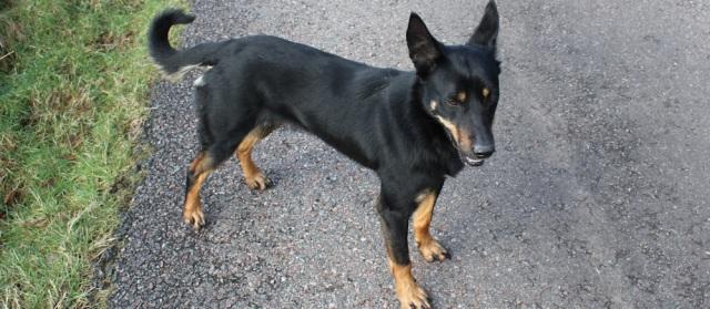 39 friendly dog, Ruth Livingstone in Drimnin