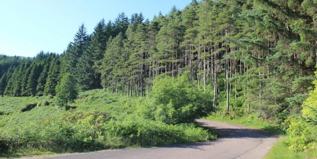 62 winding road to Loch Ulsge, Ruth's coastal walk around Scotland, Kingairloch