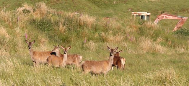68 deer near Loch Uisge, Kingairloch, Ruth Livingstone