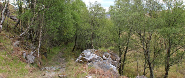 11 walking through trees towards Blain, Ruth Livingstone in Scotland