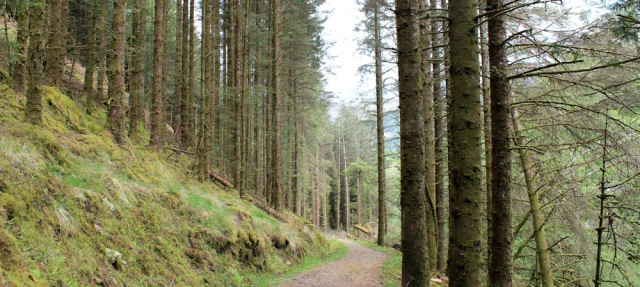 02 forest walking, Ruth's coastal walk, Loch Moidart