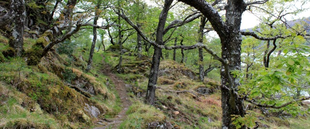10 old trees, Ruth's coastal walk, Loch Moidart