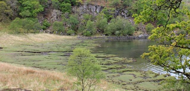 12 marshy bay, Ruth's coastal walk, Loch Moidart