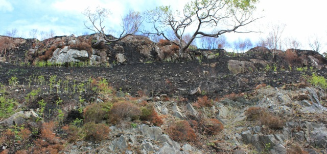 13 fire damage, Ruth walking to Arisaig, Scotland