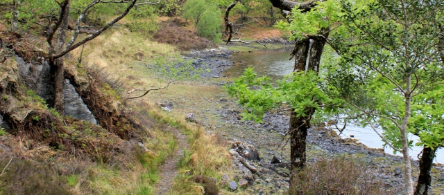 13 shore path, Ruth's coastal walk, Loch Moidart