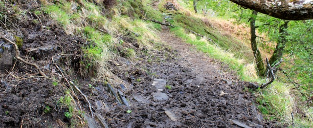 20 muddy path, Ruth's coastal walk, Loch Moidart