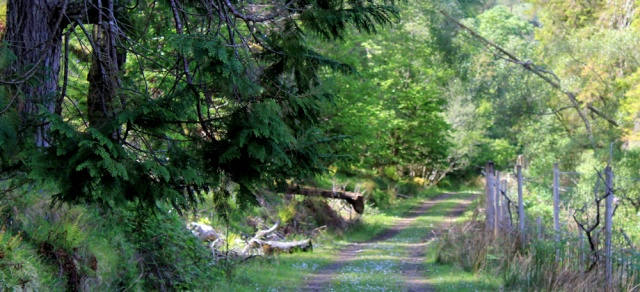 39 delightful woodland walk, Ruth walking to Arisaig, Scotland