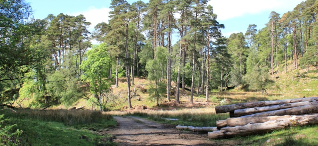 41 woodland walk on track, Ruth walking to Arisaig, Scotland