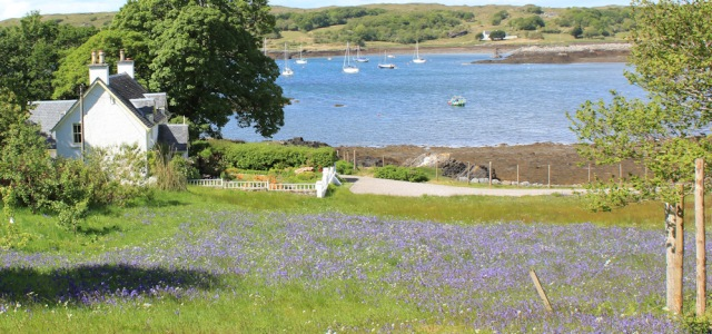 57 bluebell field and ships, Ruth walking to Arisaig, Scotland