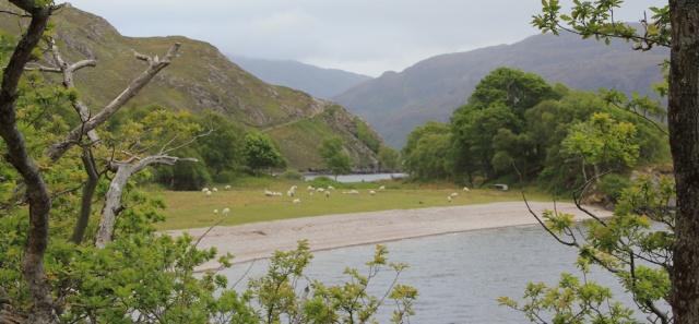 14 Rubha Dubh, Ruth walking along the shore of Loch Morar